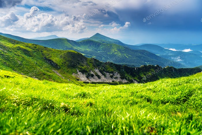 Lush green grass covered mountains meadow
