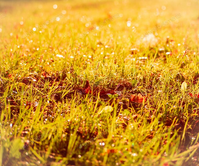 glade with grass and leaves, sunlight on beautiful meadow, bokeh and light glare, autumn