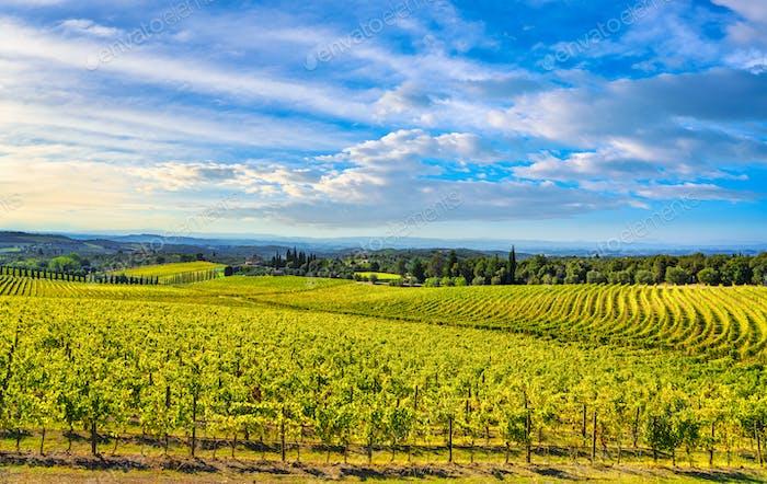 Chianti vineyard and panorama at sunset. Siena Tuscany, Italy