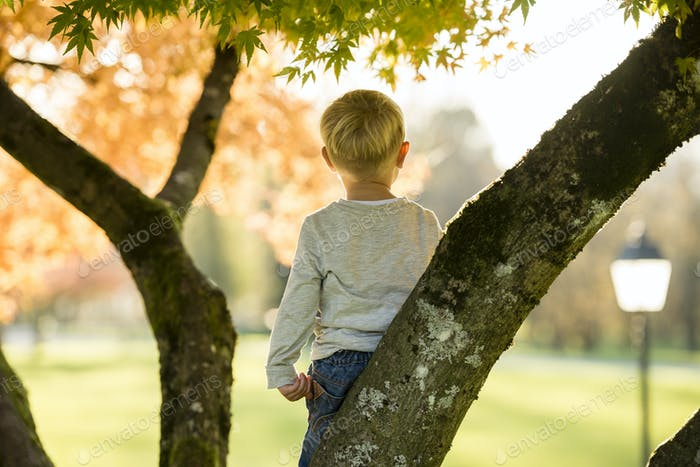Young boy climbing an autumn tree