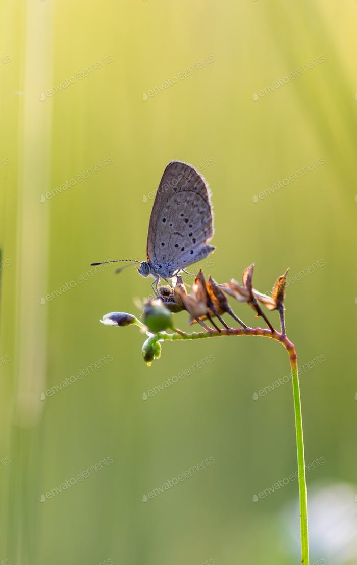 Gray butterfly perching on the flower