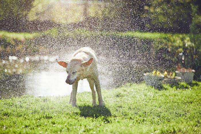 Perro sacudiendo el agua