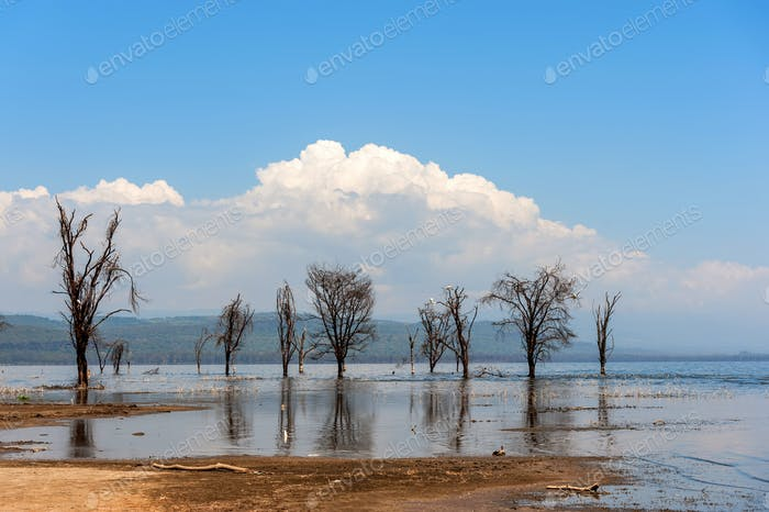 Savannah landscape with river in the National park of Kenya