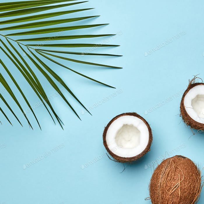 Whole and halves of coconut with a palm leaf on a blue background with a copy of the space for text