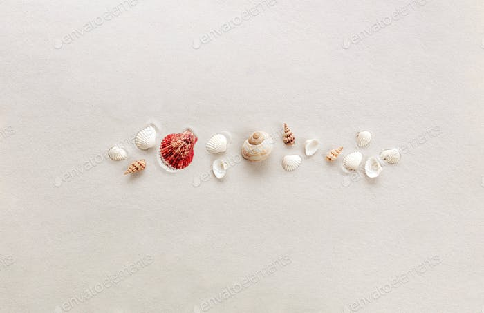 Travel, vacation trip, or sandy beach concept with sea shells on sand background
