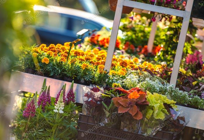 Garden Flowers Business