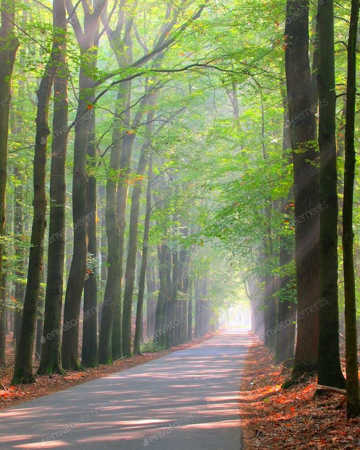 Brightly lit forest lane