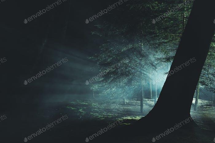 Mysterious Intense Light Inside Dark Foggy Forest