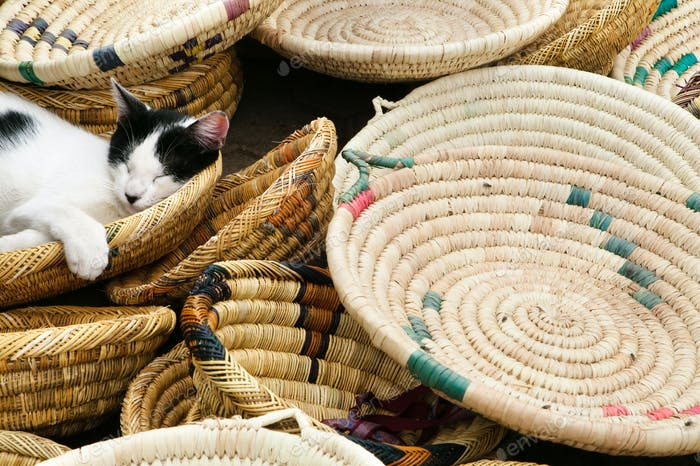 A cat asleep in baskets for sale at the market. Morocco,  Africa, cat, Felis catus