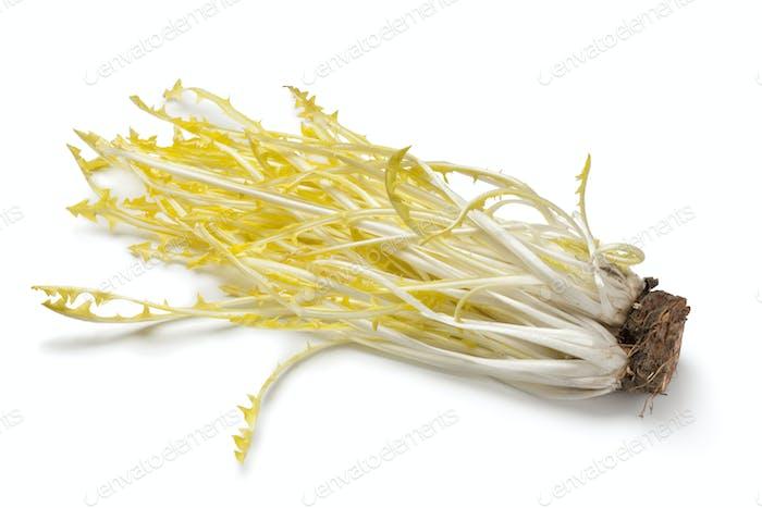 Yellow dandelion leaves