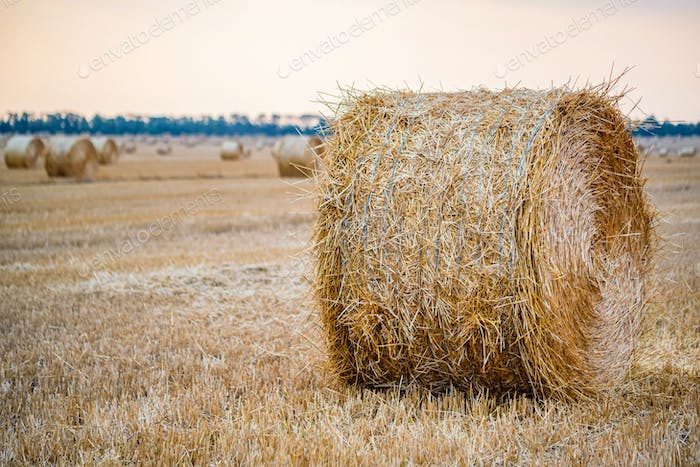 Big round haystacks on field in countryside
