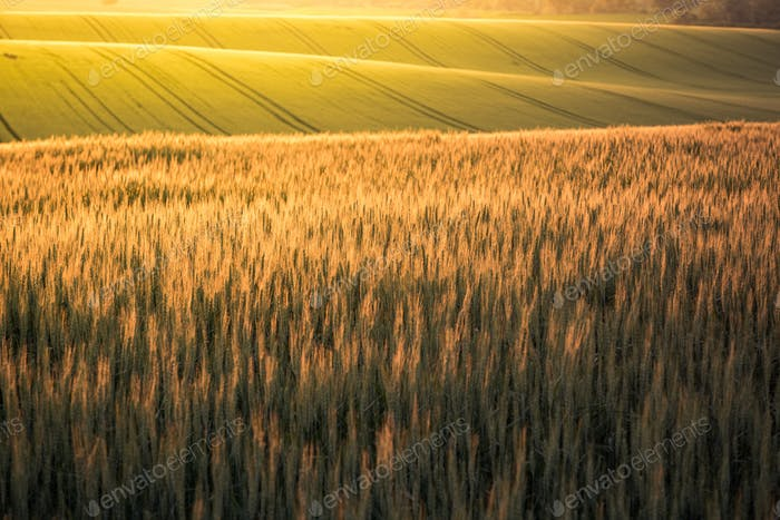 Sunrise over rolling hills in Czech Moravia region at summer