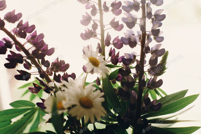 lovely lupine and chamomile bouquet in light