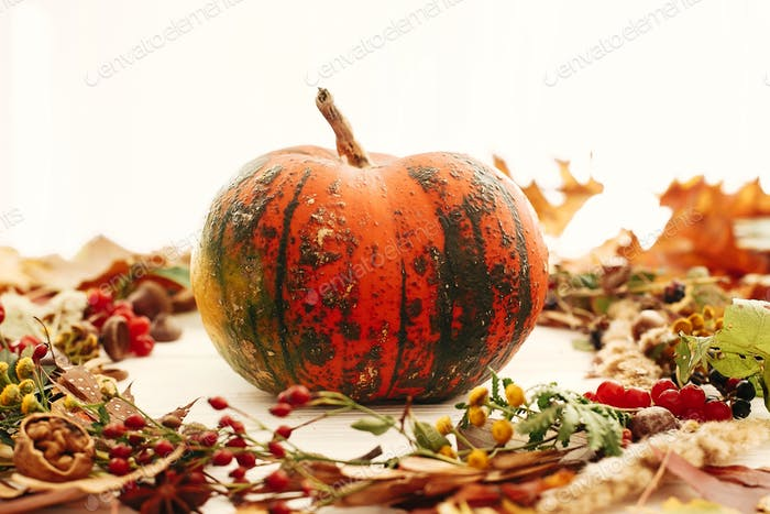 Happy Thanksgiving. Pumpkin in autumn wreath of fall leaves. Seasons greeting card