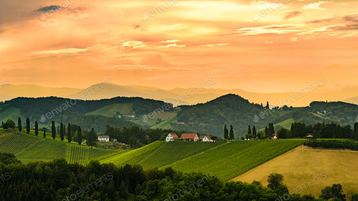 Styrian vineyard in Austria