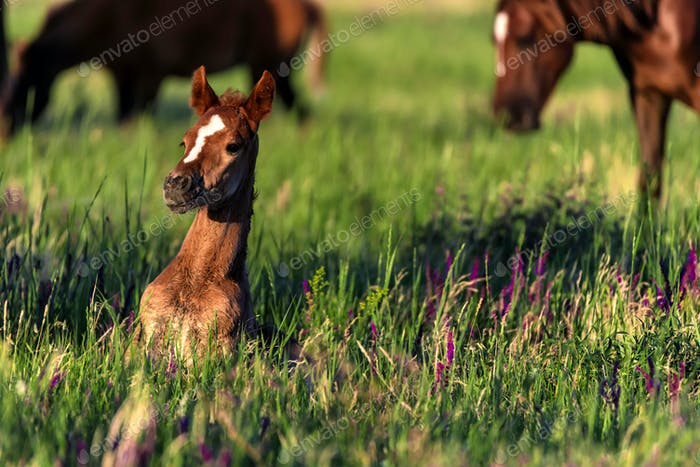 Young wild foal grazes in the sunlit meadow