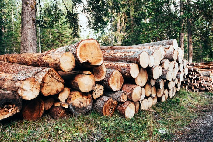 Freshly harvested wooden logs stacked in a pile in the green forest