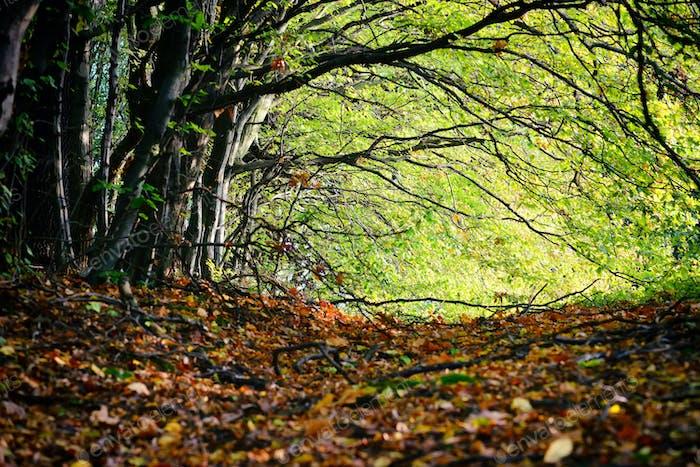 Schöner sonniger Tag im Herbstwald