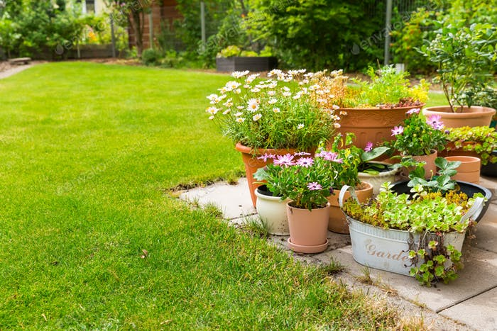 Pottet flowers, plants, vegetable and herbs on terrace or pation with green lawn
