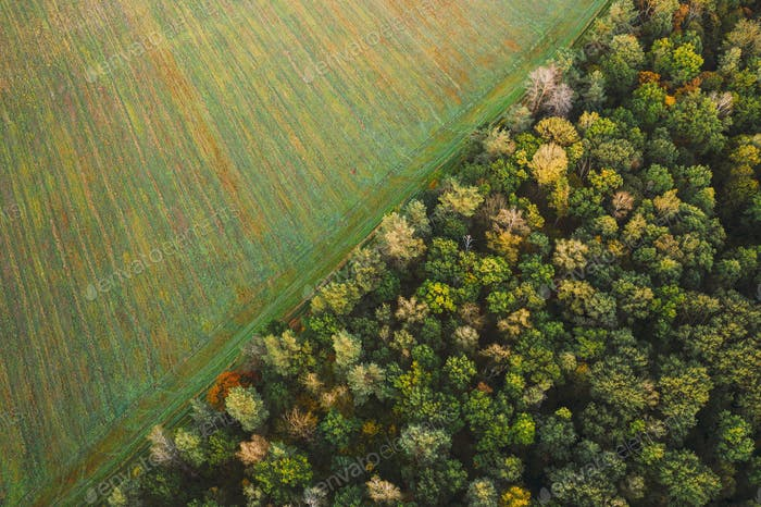 Aerial View Of Agricultural Landscape With Field And Forest In Autumn Season