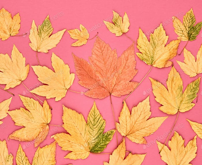 Autumn Fashion. Fall Leaves Background. Vintage.
