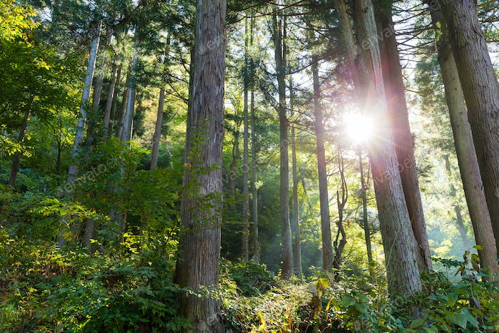 Green Forest and sunlight flare
