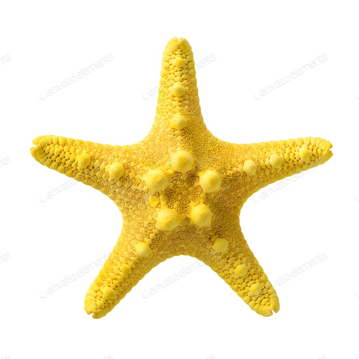 Yellow starfish