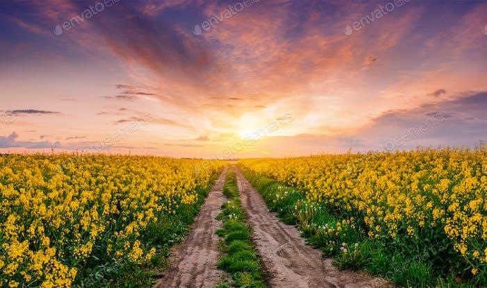 Field of blooming flowers in spring