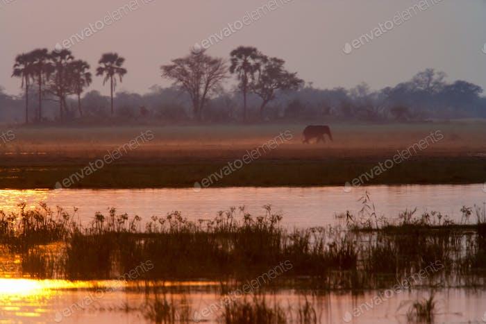 African elephant, Okavango Delta, Botswana