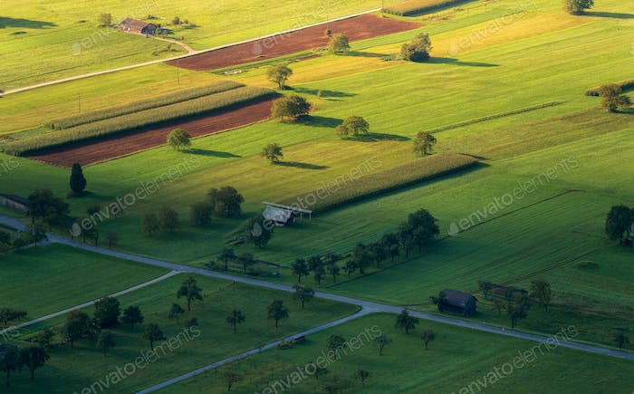 Fields and forests in the early morning