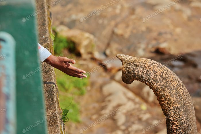 Hand and trunk