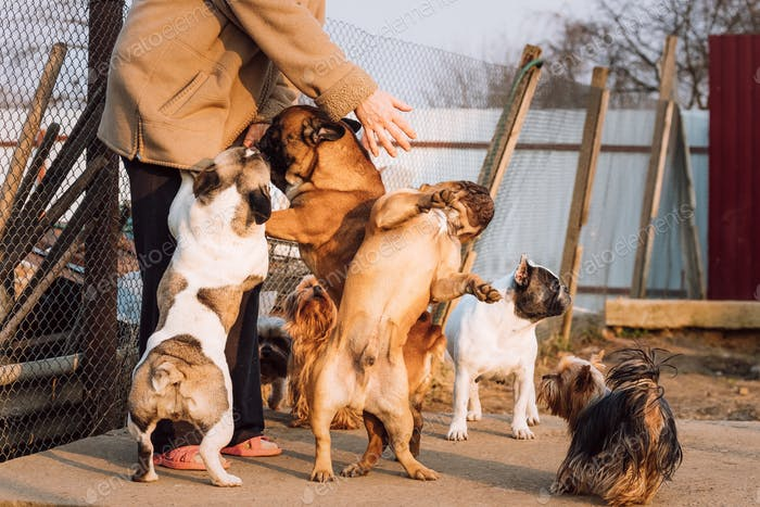 Many Different Dogs Having Fun With Woman Mistress. French Bulld