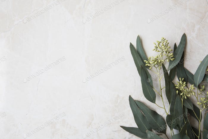 Eukalyptus auf Marmor