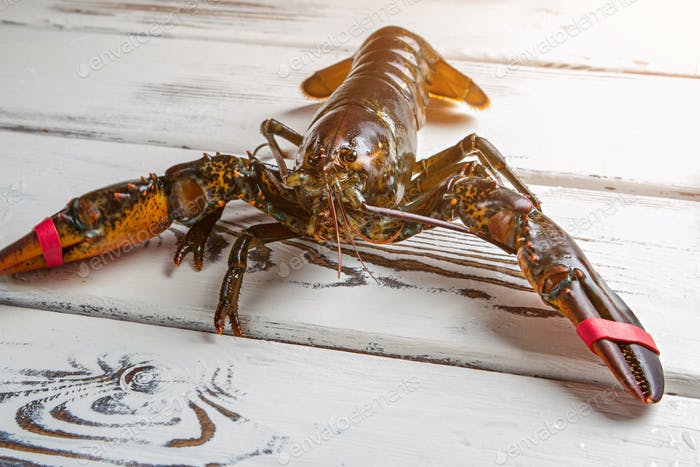Raw lobster on wooden background
