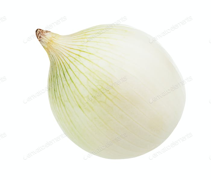 single bulb of ripe white onion isolated on white