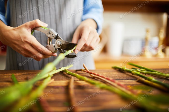 Florist Cutting Stems Closeup