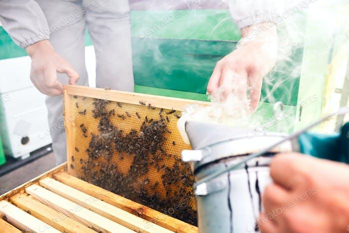 Beekeepers Smoking Hive