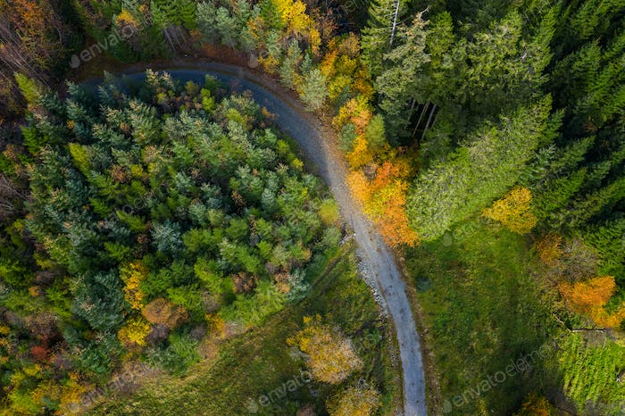 A Gravel Road In The Forest