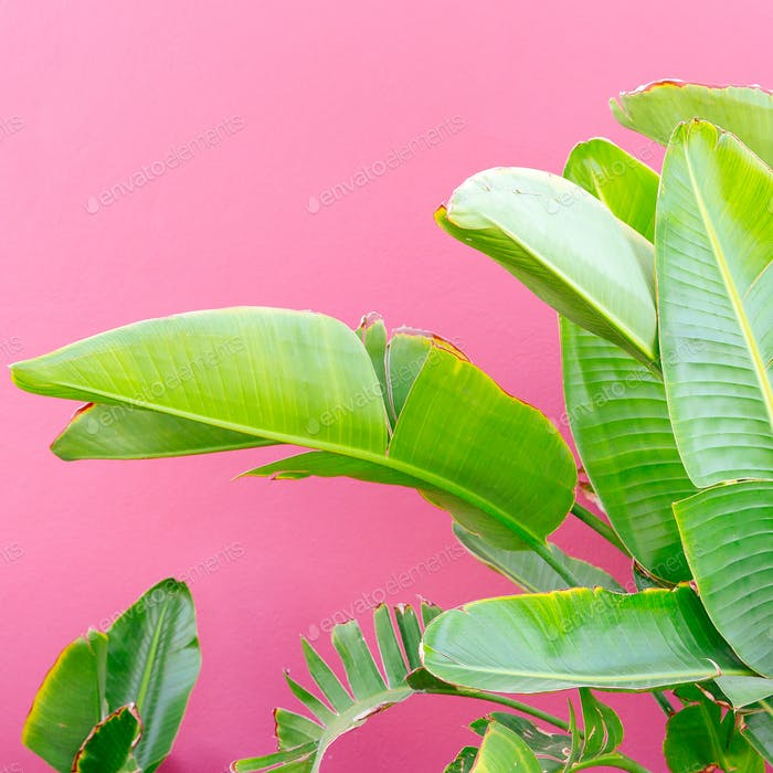 Tropical mood. Plant on pink. Minimal fashion art