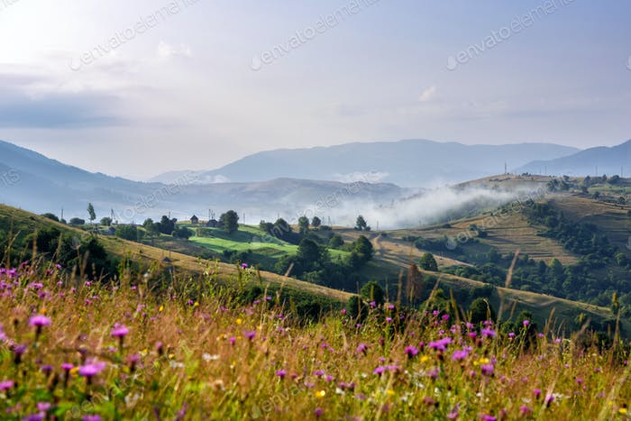 Fantastic foggy morning and bright grass in sunlight. Carpathian