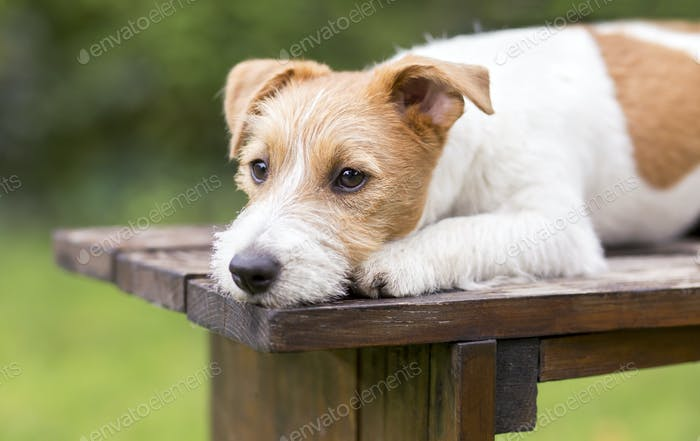 Waiting cute dog puppy lying on a wooden bench