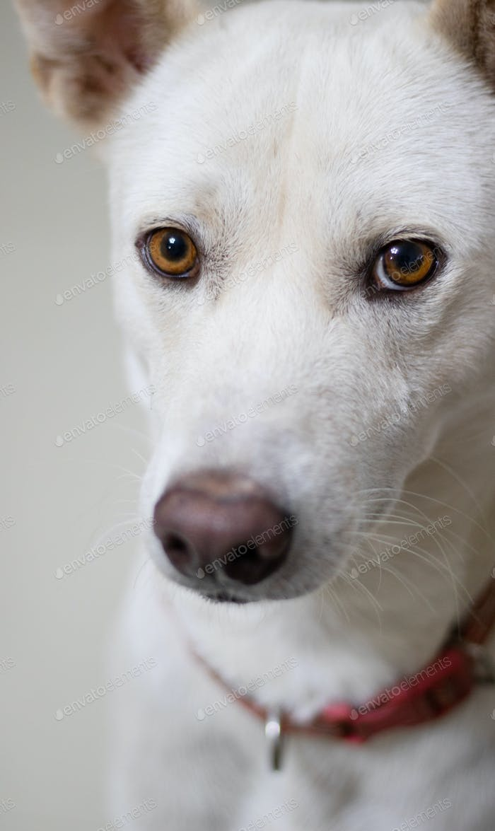 Poor white dog