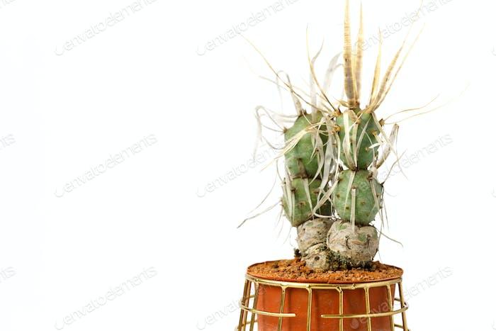 Cactus in a pot Minimalism concept.