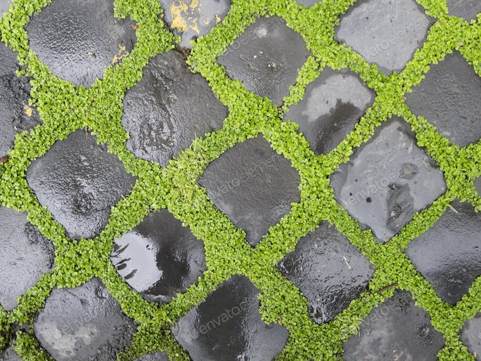 Sidewalk bricks with grass