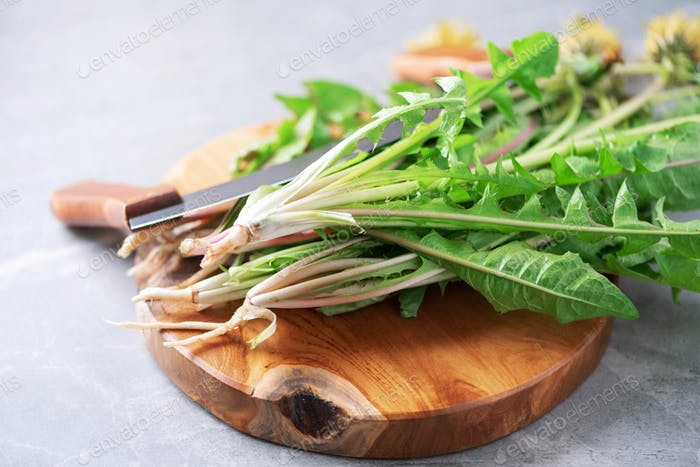 Dandelion fresh leaves for liver detox salad on gray background. Copy space. Naturopathy concept