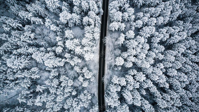Snow covered trees and road line, aerial drone photo