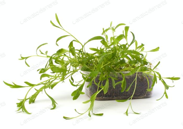 Tarragon spice