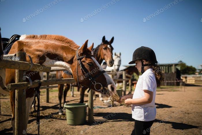 Chica alimentando al caballo en el rancho