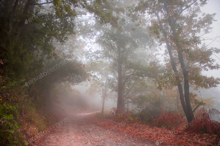 Road in the woods in autumn