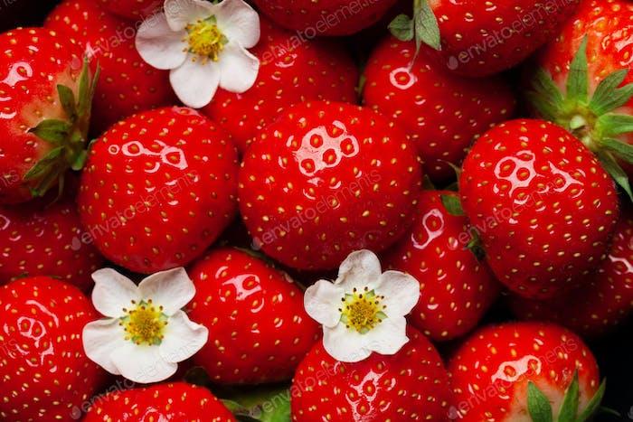 Ripe garden strawberry closeup